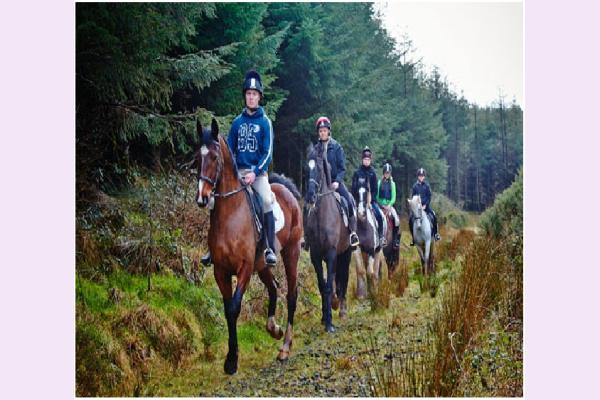 Kingsford Equestrian Centre Horse Riding Wexford Town