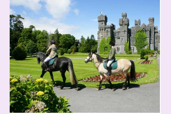Castle More Equestrian Centre Horse Riding Cork