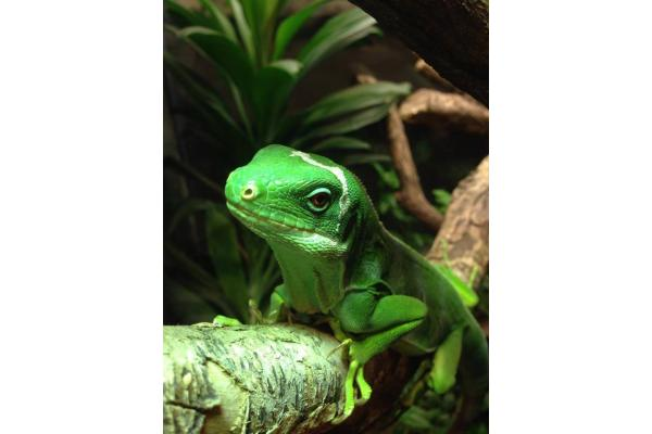 The National Reptile Zoo - Lost World @ Funtasia
