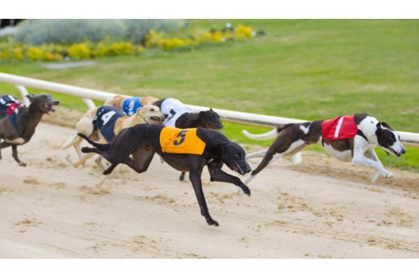 Kingdom Greyhound Stadium, Tralee
